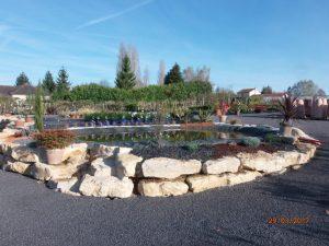 promotion pour plantations et plantes à la Sainte Catherine